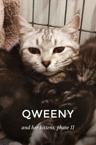 QWEENY and her kittens, phase II