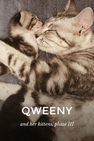 QWEENY and her kittens, phase III