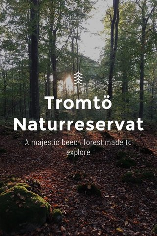 Tromtö Naturreservat A majestic beech forest made to explore