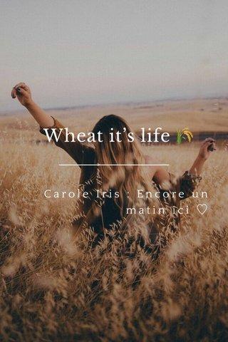 Wheat it's life 🌾 Carole Iris : Encore un matin ici ♡