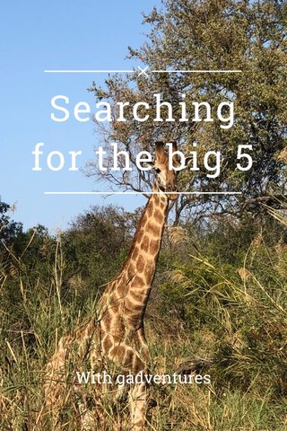 Searching for the big 5 With gadventures