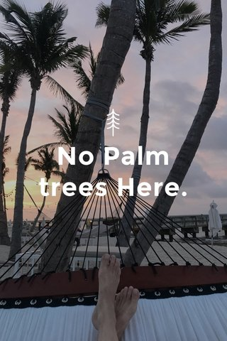 No Palm trees Here.