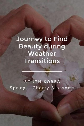Journey to Find Beauty during Weather Transitions SOUTH KOREA Spring - Cherry Blossoms