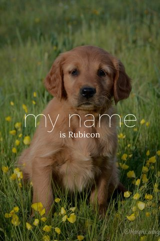 my name is Rubicon