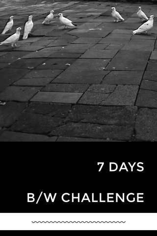 7 DAYS B/W CHALLENGE 〰️〰️〰️〰️〰️〰️〰️〰️〰️〰️〰️〰️