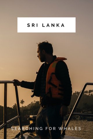 SRI LANKA SEARCHING FOR WHALES