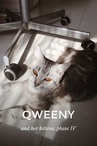 QWEENY and her kittens, phase IV