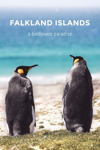 FALKLAND ISLANDS a birdlovers paradise