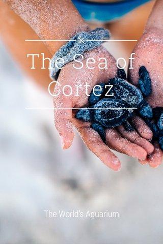 The Sea of Cortez The World's Aquarium