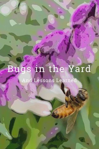 Bugs in the Yard And Lessons Learned