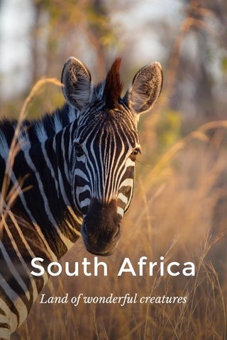 South Africa Land of wonderful creatures