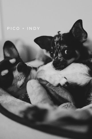 PICO + INDY