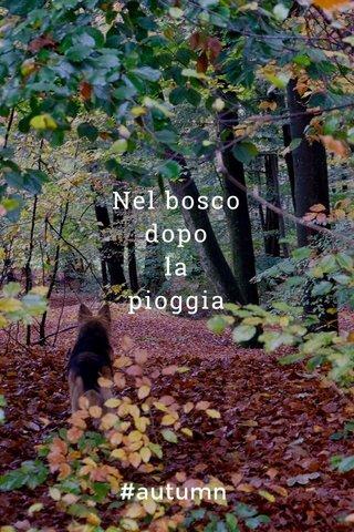 Nel bosco dopo la pioggia #autumn