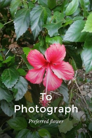 To Photograph Preferred flower