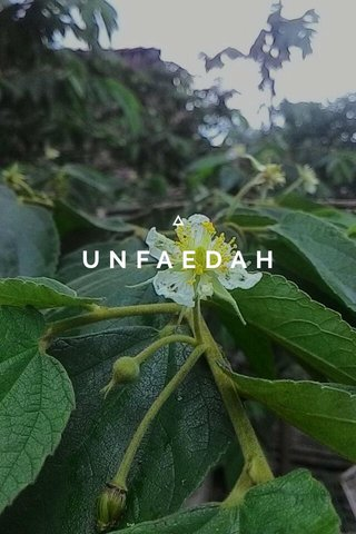 UNFAEDAH