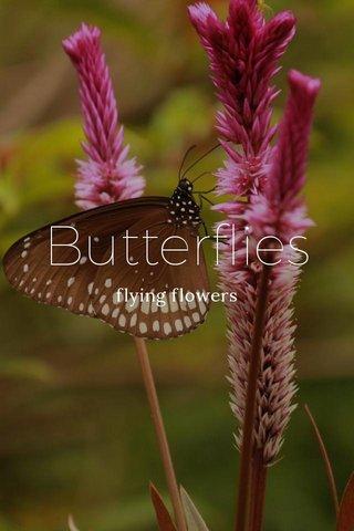 Butterflies flying flowers