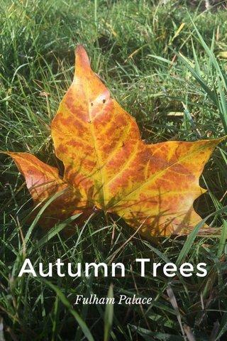 Autumn Trees Fulham Palace