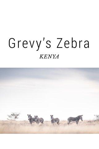 Grevy's Zebra KENYA