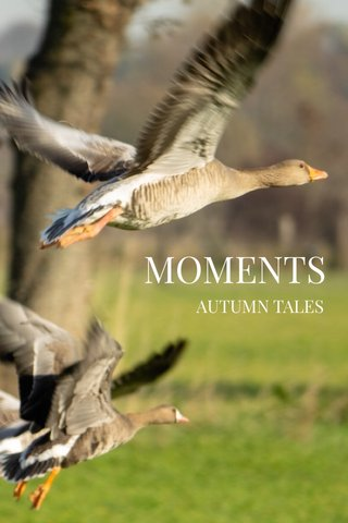 MOMENTS AUTUMN TALES