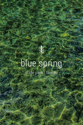 blue spring state park | florida