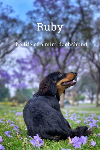 Ruby The life of a mini dachshund