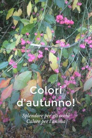 Colori d'autunno! Splendore per gli occhi Calore per l'anima