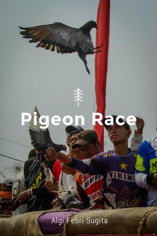 Pigeon Race Algi Febri Sugita