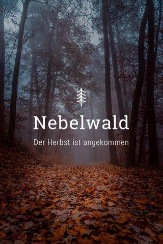 Nebelwald Der Herbst ist angekommen