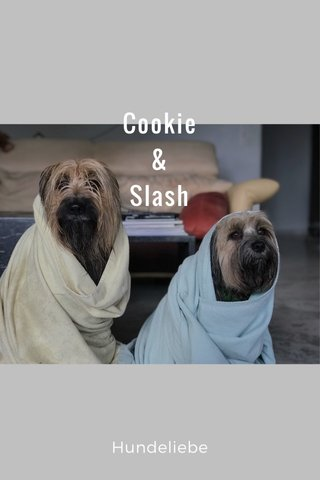 Cookie & Slash Hundeliebe