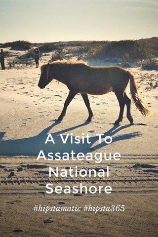A Visit To Assateague National Seashore #hipstamatic #hipsta365