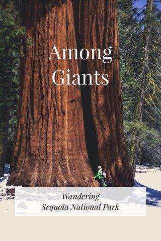 Among Giants Wandering Sequoia National Park