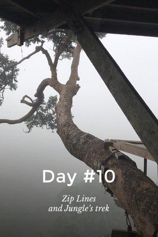 Day #10 Zip Lines and Jungle's trek