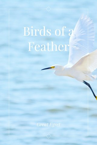 Birds of a Feather Great Egret