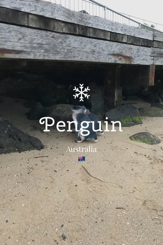 Penguin Australia 🇦🇺