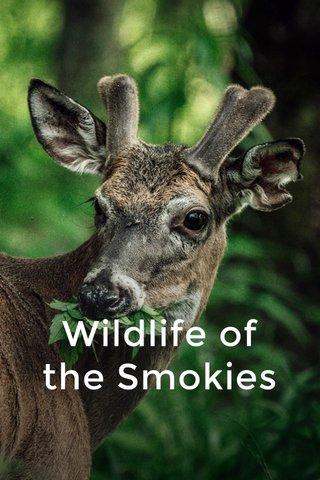 Wildlife of the Smokies