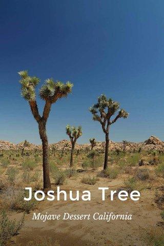Joshua Tree Mojave Dessert California