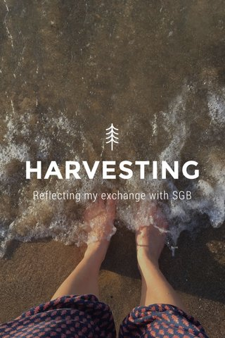 HARVESTING Reflecting my exchange with SGB