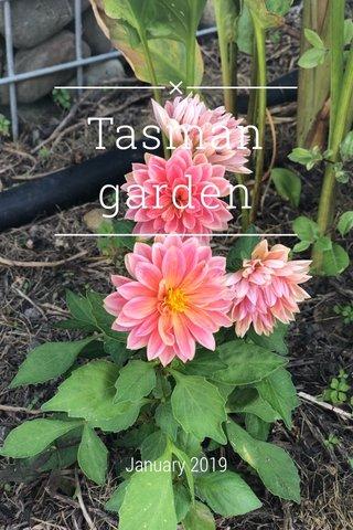 Tasman garden January 2019