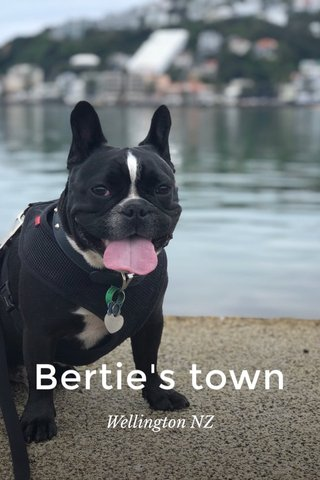 Bertie's town Wellington NZ