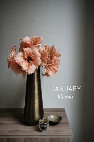 JANUARY blooms