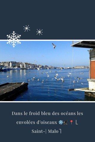 Dans le froid bleu des océans les envolées d'oiseaux ❄️🦅 📍⎣ Saint-| Malo⎤