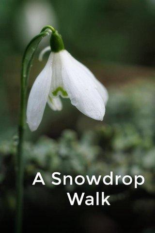 A Snowdrop Walk