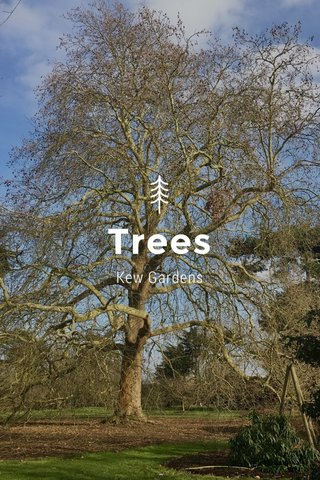 Trees Kew Gardens
