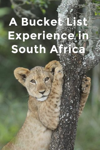 A Bucket List Experience in South Africa