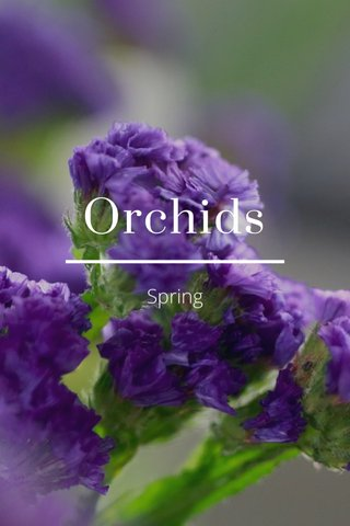Orchids Spring