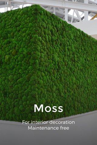 Moss For interior decoration Maintenance free