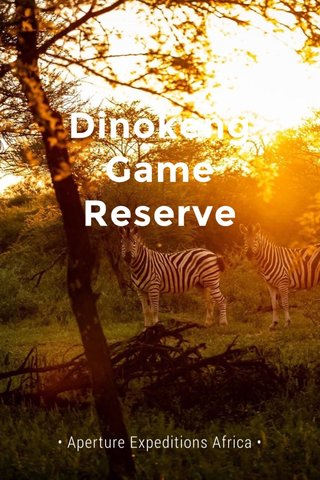 Dinokeng Game Reserve • Aperture Expeditions Africa •