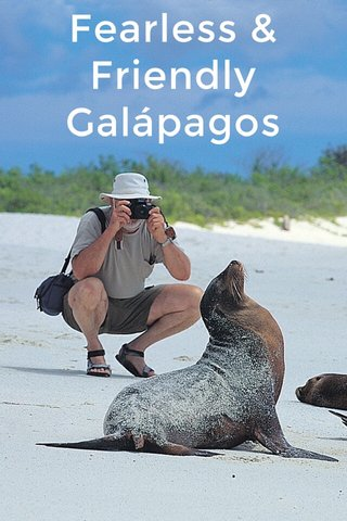 Fearless & Friendly Galápagos