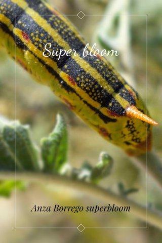 Super bloom Anza Borrego superbloom