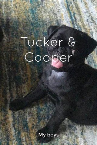 Tucker & Cooper My boys